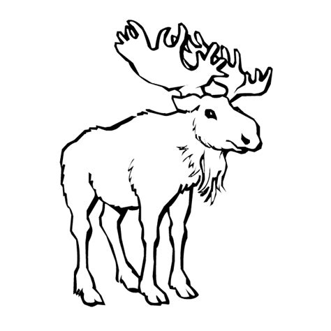 moose coloring page animals town animals color sheet