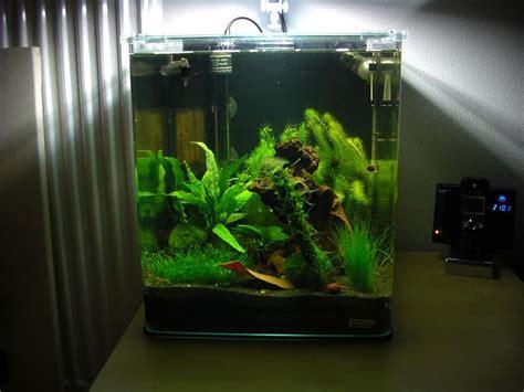 aquarium cube 200 l mein dennerle nano cube 30l aquarium forum