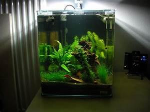 60 Liter Becken : mein dennerle nano cube 30l aquarium forum ~ Michelbontemps.com Haus und Dekorationen