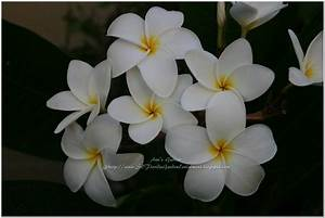 White Flowers Names And Images 11 Hd Wallpaper ...