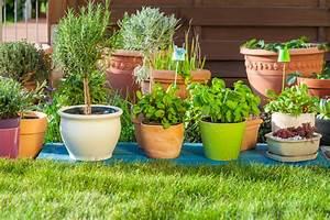minze auf dem balkon pflanzen so geht39s With französischer balkon mit pflanzen für vertikale gärten