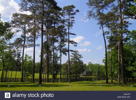 thomasville pine christmas tree pebble hill plantation stock photos pebble hill plantation stock images alamy