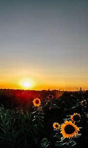 Sunrise Phone Wallpaper [1080x2340] - 045