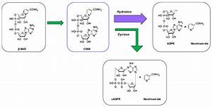 Measuring Cd38 Hydrolase And Cyclase Activities