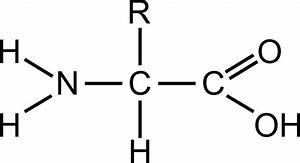 Clipart - Amino acid (general)