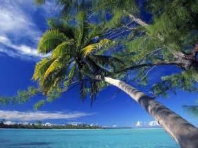 Palm Tree Islands Beaches