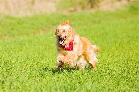 dog zoomies archives  dogington post