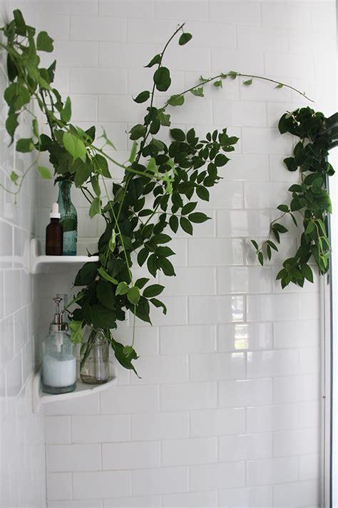 shower plants spa bathroom on a budget the budget decorator