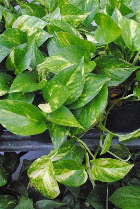 Plant Leasing - Westwood Gardens