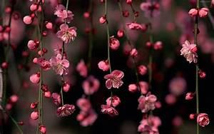 Flowers Wallpapers: Pink Flowers Wallpapers
