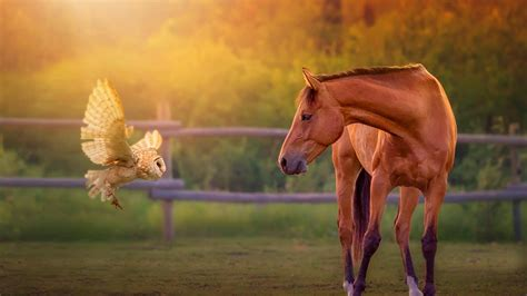 Awesome High Resolution Wallpapers Horse Hd Wallpapers Free Download