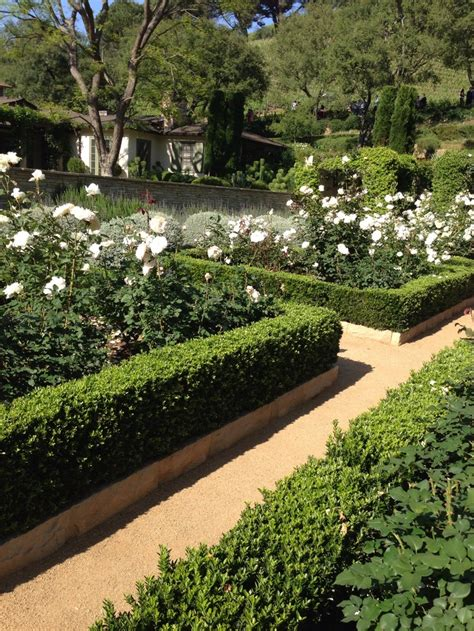 hedge gardens 13 best images about box hedge on pinterest gardens hedges and white roses
