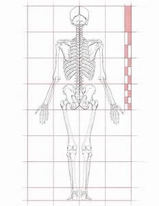 Human Anatomy Drawing Tutorial Pdf