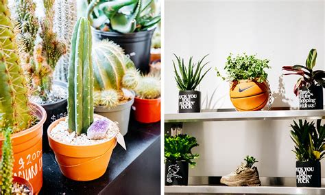 plant shed nyc plantshed opens downtown new york location