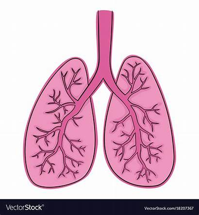 Lungs Drawing Vector Doodle Royalty