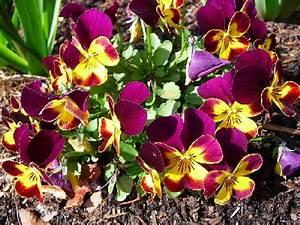 Fleur D Hiver Pour Jardinière : des fleurs en hiver quelles plantes choisir ~ Dailycaller-alerts.com Idées de Décoration