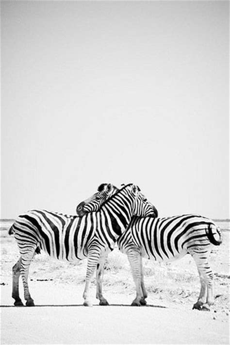 17+ best images about Animal Kingdom on Pinterest