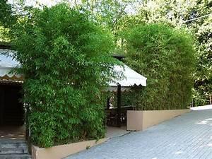 Bambus Als Zimmerpflanze : bambus als sichtschutz f r die gastronomie kaufen bambusb rse wohnen accessoires etc ~ Eleganceandgraceweddings.com Haus und Dekorationen