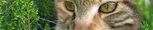 Katze Erbricht Oft : was sind typische krankheitssymptome worauf deuten sie hin katzen ~ Frokenaadalensverden.com Haus und Dekorationen
