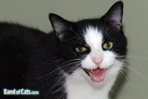 21 cat behaviors 32 cat sounds and their secret meaning