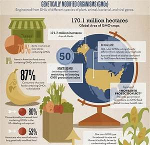 Infographic About Genetically Modified Organisms  Gmos