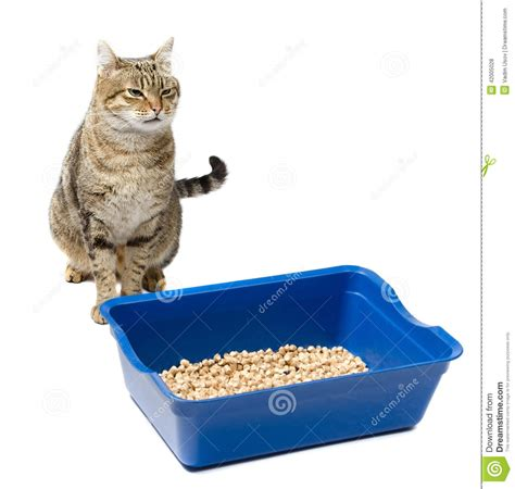 Cat Sitting Near The Toilet On A White Background Stock
