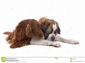 royalty free stock image cuddling dogs image