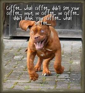 Funny Dog (and Cat) Photos with Captions | Motley Dogs