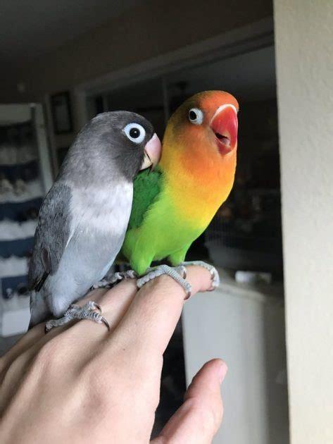 Goth Girlfriend and Kiwi