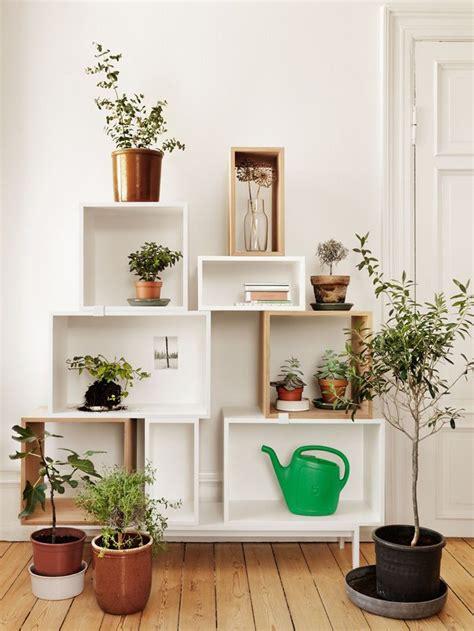 plante cuisine decoration 5 conseils déco pour mettre des plantes dans votre