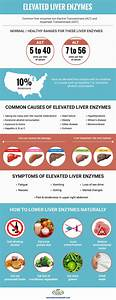 Understanding Elevated Liver Enzymes
