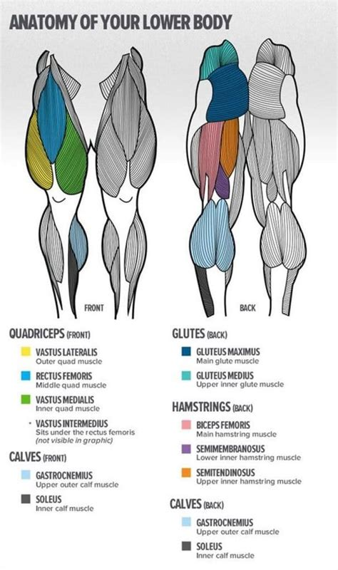 The medial, or inside, head arises from the medial condyle of the back of. Best Old-School Leg Workouts - Fitness Volt