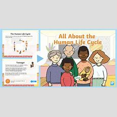 * New * Ks1 All About The Human Life Cycle Powerpoint  Baby, Child