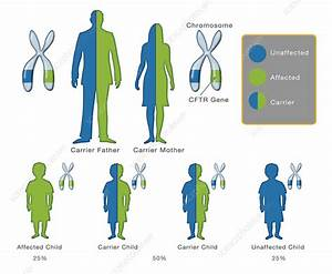Cystic Fibrosis Mutation  Illustration