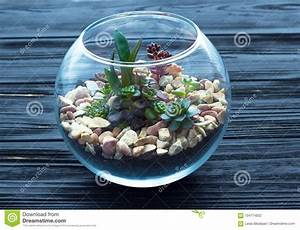 Minigarten Im Glas : mini garden in glass vase on the wooden background stock photo image of stones miniature ~ Eleganceandgraceweddings.com Haus und Dekorationen