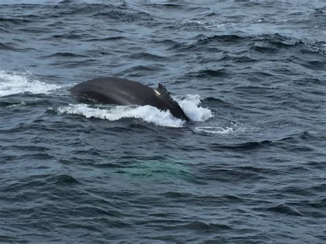 Wild Whales, Hyannis, Cape Cod  Gina Pacelli