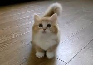 world s cutest cat world s cutest kitten is confused