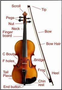 Parts Of A Violin For Beginners