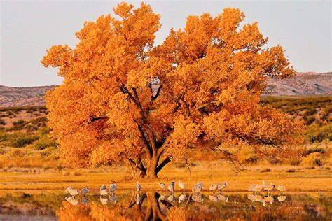 fall bird migration