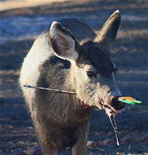 reston association oks deer hunt  sourwood lane