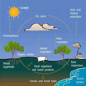 The Diagram Below Illustrates The Carbon Cycle In Nature