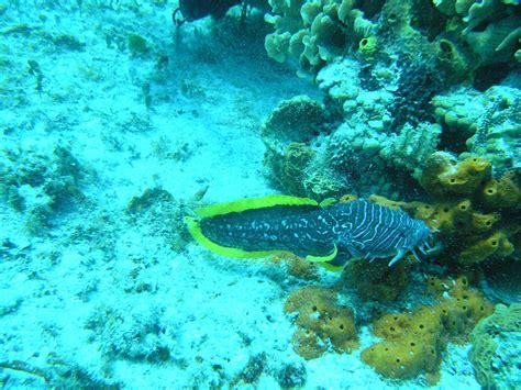 Cozumel Dive Diving Cozumel Mexico Dive Palancar