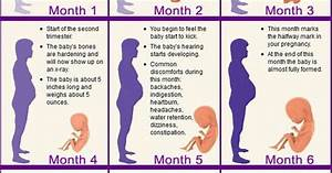 Month by month pregnancy stages | Baby | Pinterest | Early ...