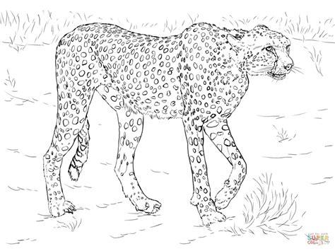 Cheetah Kleurplaat by Get This Cheetah Coloring Pages Free To Print 3ab62