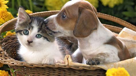 puppy  kitten wallpaper gallery