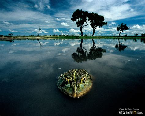 National Geographic Animal Wallpapers - wildlife national geographic 100 best wildlife animal