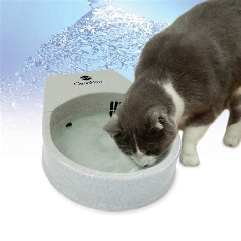 kh cat clean flow filter water bowl  cats petco