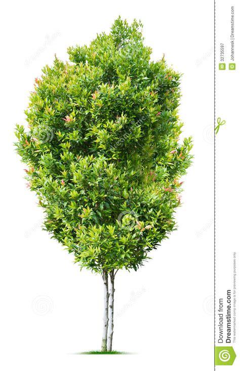 small tree royalty  stock photography image