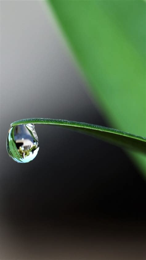 Water Drop 4K Wallpaper | HD Wallpaper Background