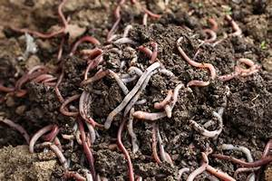 Vermicomposting Worm Types – What Are The Best Worms For ...
